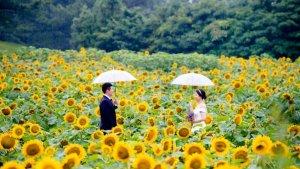 Late Spring / Summer Korean Dramas 2020