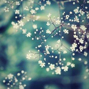 wintercrystal