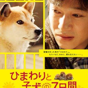 7 Days of Himawari & Her Puppies (2013) photo