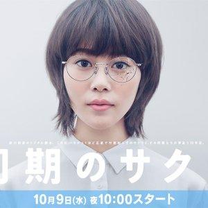 Doki no Sakura (2019) photo