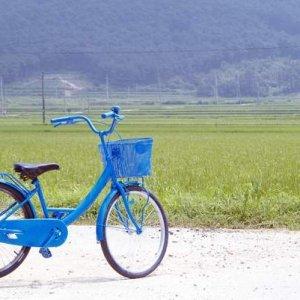 The Elephant on the Bike (2007) photo