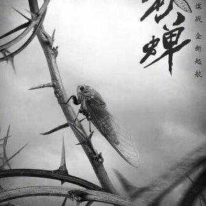 Autumn Cicada (2020) photo