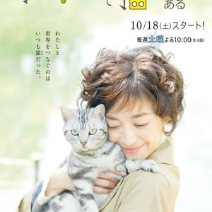 Gou Gou, the Cat (2014) photo