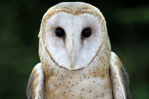 Owlsarecool15