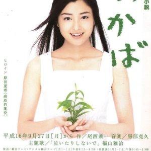 Wakaba (2004) photo