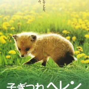 Helen the Baby Fox (2005) photo